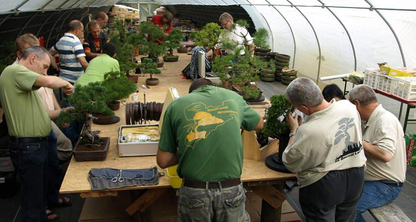 Bonsai Workshop in Bonsaischule Wenddorf